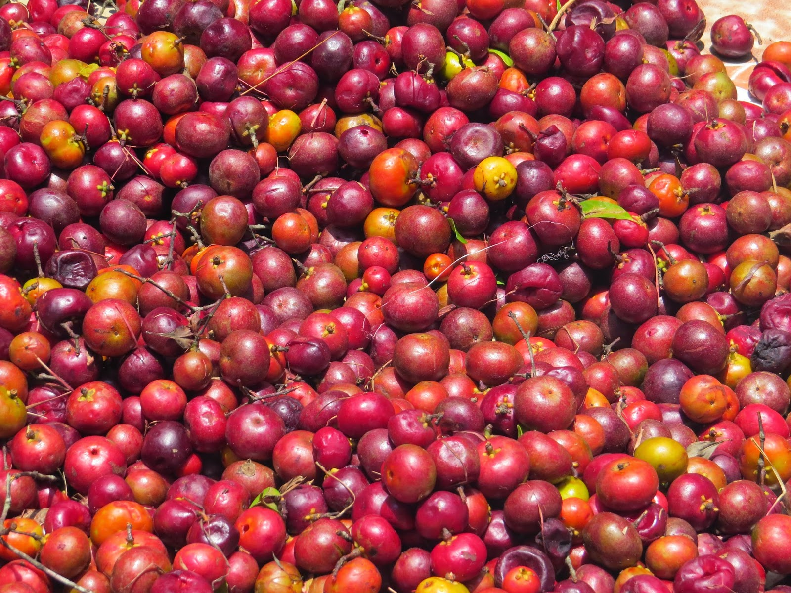 KOKUM: The healing and cooling spice