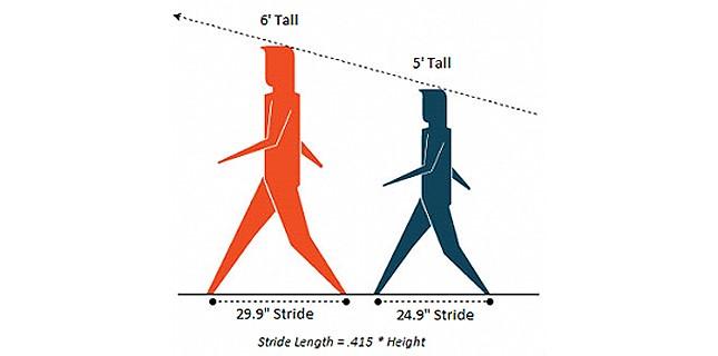 Image 2 Stride length