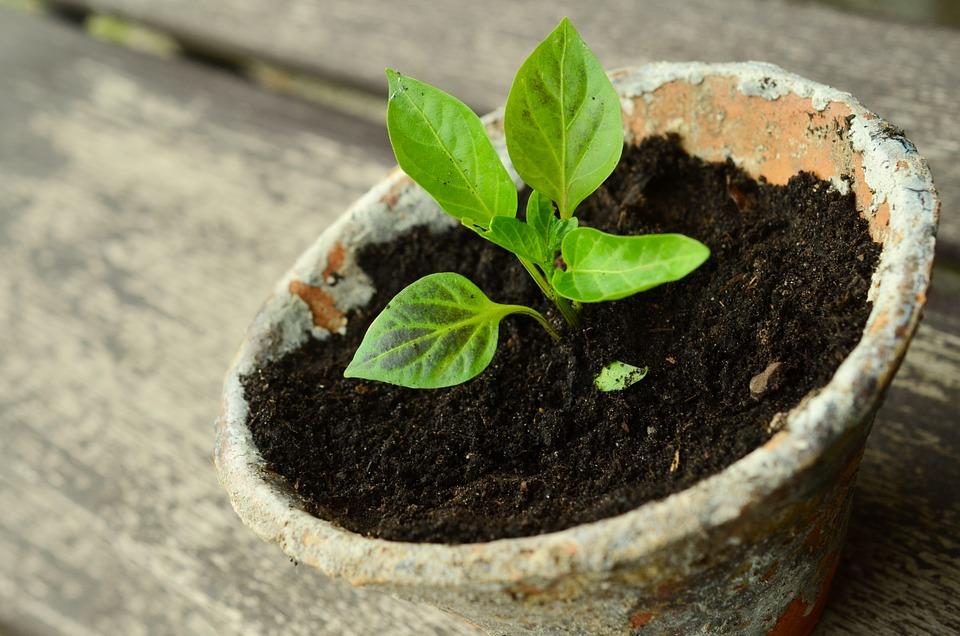 No 7- Small plant