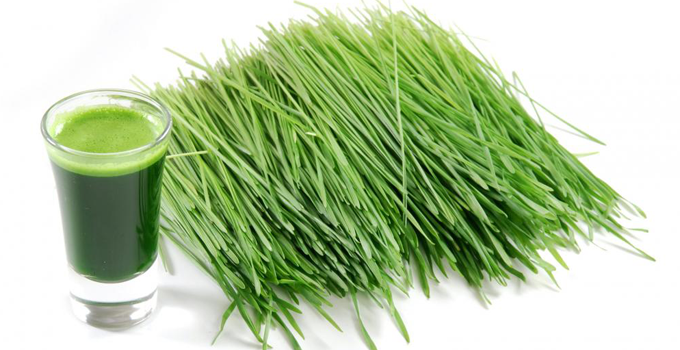 Wheat-Grass-A-Green-Gold