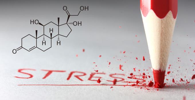 cortisol the stress hormone