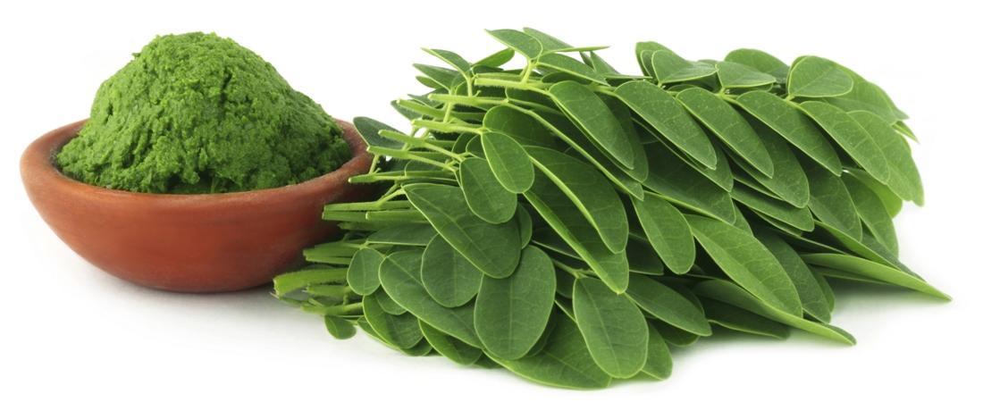Moringa: Its benefits and side effects - GOQii