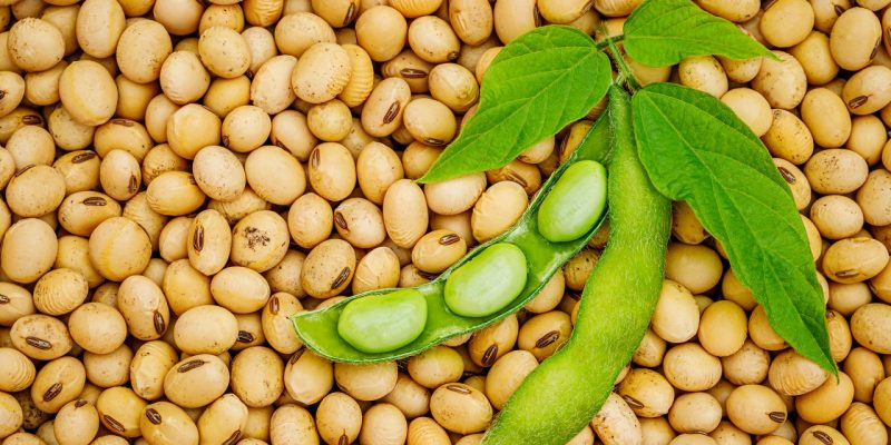 Is Soy Healthy or Toxic For You?