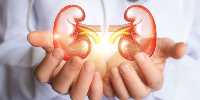 All About Your Kidneys – The Natural Cleansers